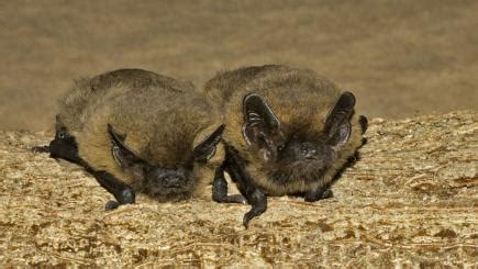why you should attract more bats into your garden 9 ways
