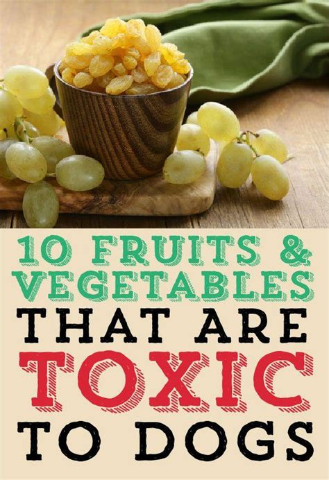 are onions poisonous to dogs 10 fruits vegetables that are toxic to dogs trusper