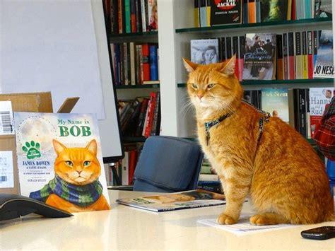 un gato callejero llamado bob cinco razones para leerlo