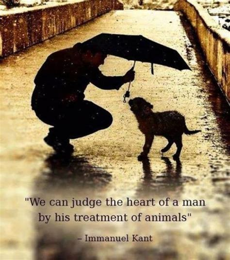 the kindness cure how the science of compassion can heal your and your world books animals quotes quotes about animals sayings about animals