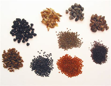 with seed saving seeds flowers