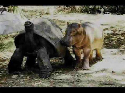 imagenes de animales raros y deformes 5 animales fuera de lo com 250 n rarezas del mundo ii youtube