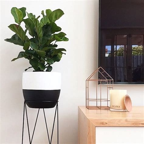 kmart styling dipped pot plant  plant stand plants