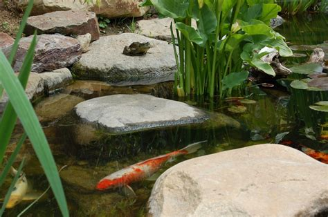 is a backyard pond an ecosystem backyard ecosystem pond projects fl melbourne vero beach