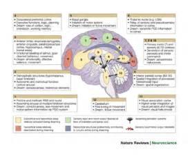 the science of sleep a focus on rem sleep and