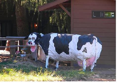 How To Make A Paper Mache Cow - the mind of steve joe bob paper mache cows installment 1