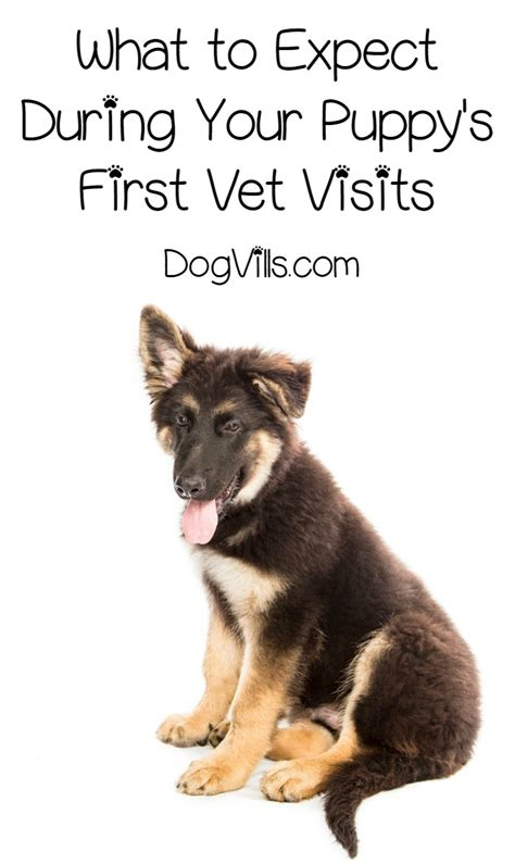 puppy vet visits puppy care all about the weeks of vet visits dogvills