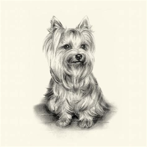 show breeds top selling terrier breeds 2013 breeds picture