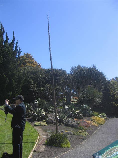 botanical gardens auckland auckland botanic gardens