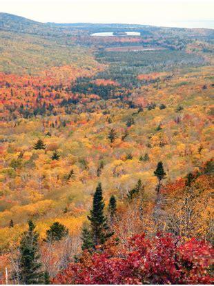 forest type  michigan northern hardwood   msu extension