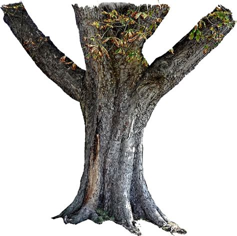 trunk tree tree trunk stock png feel free to use my