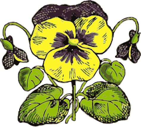 Pansy Clipart