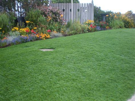 giardino prato prato da giardino giardinaggio prato da giardino