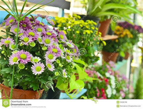 Flowers From Many Gardens Colorful Flowers In Garden Royalty Free Stock Image Image 33285786