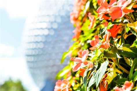 Disney World Flower And Garden Festival Epcot Flower And Garden Festival Tips Disney World Flower And Garden
