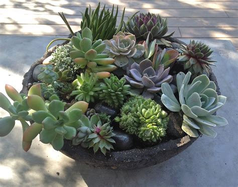 succulent arrangements 301 moved permanently