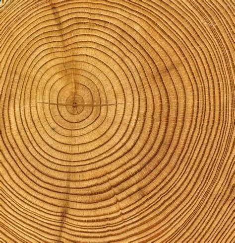tree ring tree rings journey for orphaned youth