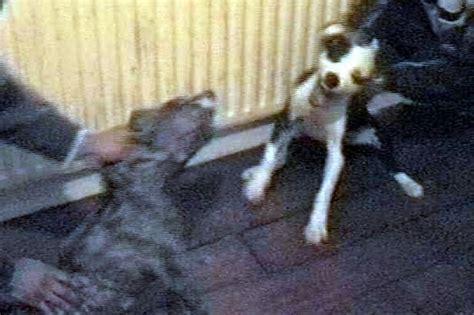 stolen pets   training bait  sick dog fights