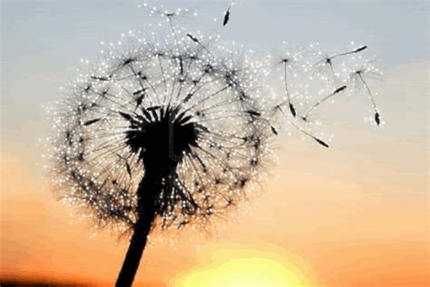 dandelion tattoo meaning yahoo 9638844 a dandelion blowing seeds in the wind 480x3201 gif
