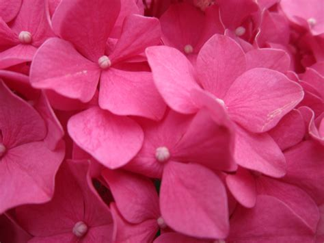 Vs Pink Flower pink flower by dreamfutureais on deviantart