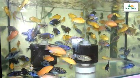 Poisson Exotique Pour Aquarium by Poisson Aquarium Eau Douce Poissons D Eau Douce Pour Votre