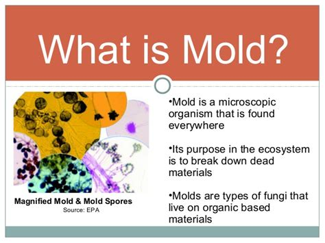 what color is mold mold to sold fact vs fiction