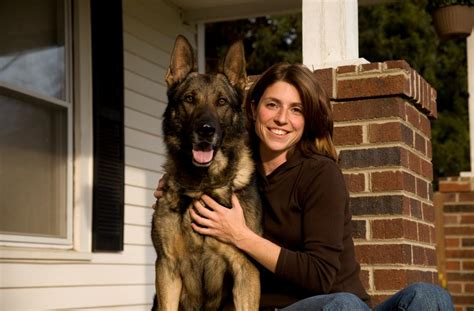 we provide german shepherd personal protection dogs for