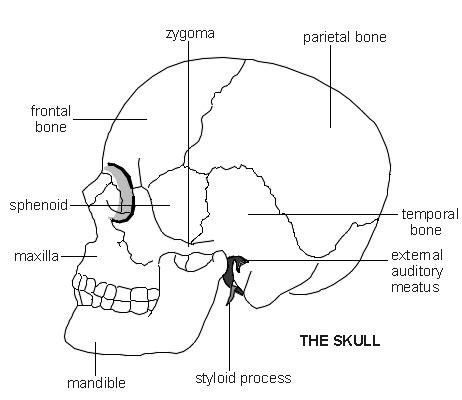 diagram of the skull skull diagram patient