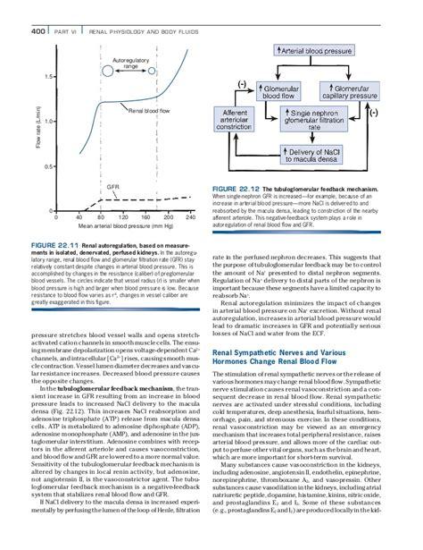 Feedback Mechanisms Worksheet Answers by Feedback Mechanisms Homeostasis Worksheet