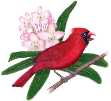 west virginia state flower west virginia state bird and