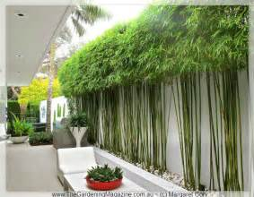 25 best ideas about bamboo garden on pinterest bamboo