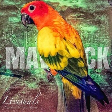 maverik login maverick the parrot maverickparrot logan