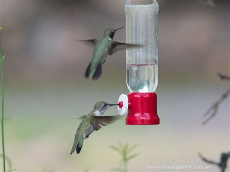 best 28 when do i put out hummingbird feeders wild