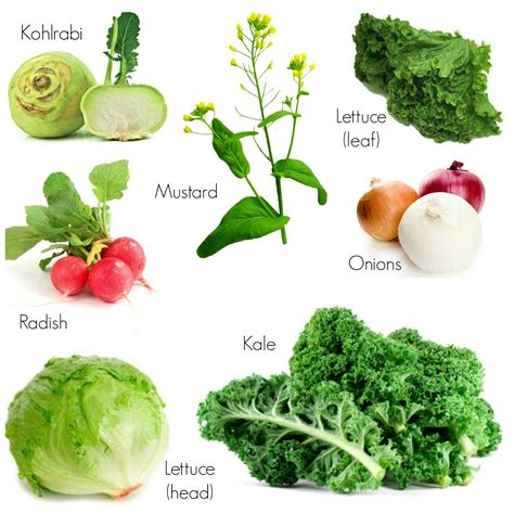 7 Vegetables To Plant For Your Fall Garden Fall Garden Vegetables