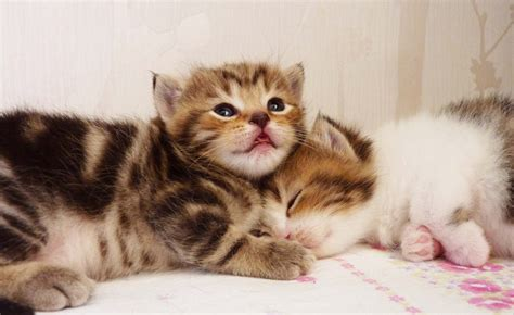 cute cat names youtube names for 7 cute kittens that begin with the letter quot o