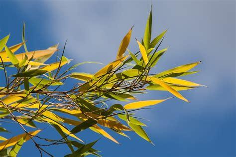 wann muss zahnriemen gewechselt werden wann muss bambus zur 252 ckgeschnitten werden