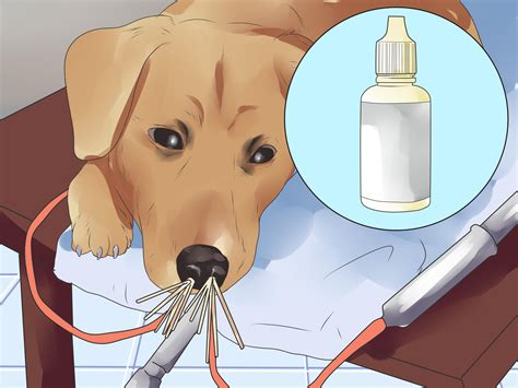 aspergillosis in dogs how to treat aspergillosis in dogs 8 steps with pictures