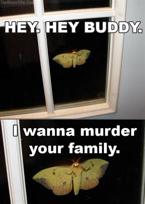 Moth Meme - hey hey buddy