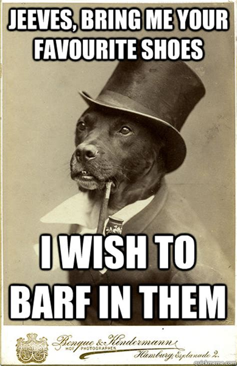 Benson Dog Meme - jeeves bring me your favourite shoes i wish to barf in