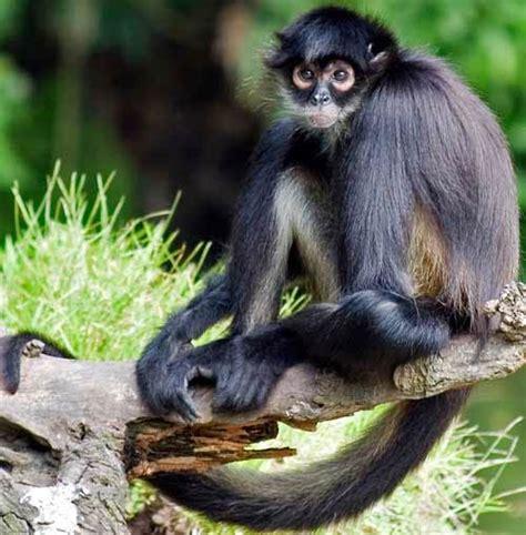 blogbipeds different types of monkeys