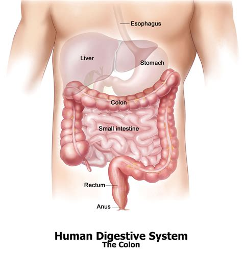 Large Intestine Detox by Colinics Registration Forms