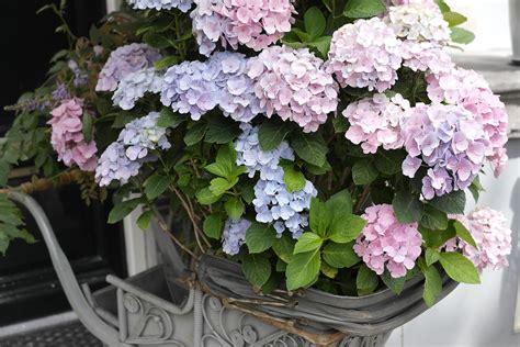 co di fior fiori matrimonio estivo quali scegliere e perch 233 my