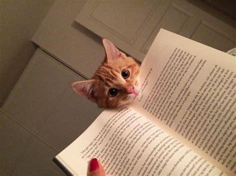 leggere la fotografia osservazione 8884211476 basta leggere i gatti chiedono attenzione durante la lettura repubblica it