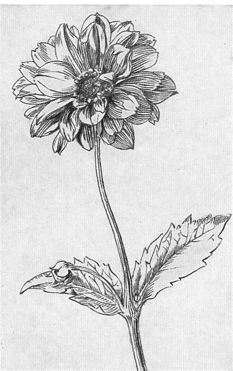 japanse tekeningen bloemen teken en schildercursus fritske3