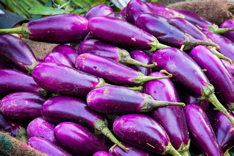manfaat khasiat terung ungu terhadap kesihatan rasa