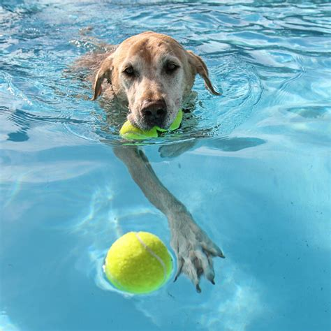 Certified Canine Hydro Therapists Offering Therapy And