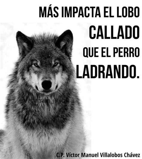 imagenes perronas de lobos m 225 s impacta el lobo callado que el perro ladrando