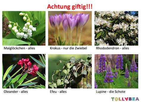 giftige pflanzen vorsicht
