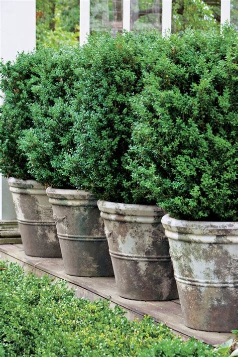 Large Patio Planters For Trees by 17 Best Ideas About Planter Pots On Flower