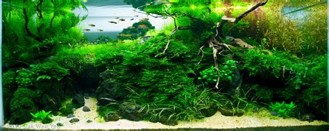Freshwater Aquascaping by Manage Your Freshwater Aquarium Tropical Fishes And